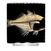 Tibetan Glassfish Shower Curtain