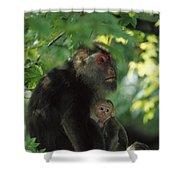 Tibetan Macaque Nursing Baby Shower Curtain