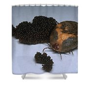 Tick With Eggs Shower Curtain