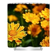 Tickseed Shower Curtain