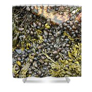 Tidal Pool With Rockweed Shower Curtain