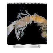 Tidepool Ghost Shrimp Shower Curtain
