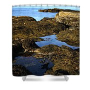 Tidepool In Maine Shower Curtain