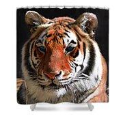 Tiger Blue Eyes Shower Curtain by Rebecca Margraf