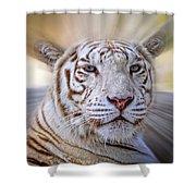 Tiger Blur Shower Curtain