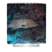 Tiger Grouper Swimming Along The Bottom Shower Curtain