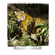 Tiger In The Rough Shower Curtain