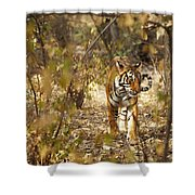 Tiger In The Undergrowth At Ranthambore Shower Curtain