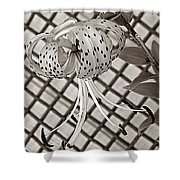 Tiger Lily And Rusty Gate Shower Curtain
