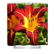 Tiger Lily0226 Shower Curtain