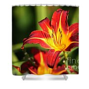 Tiger Lily0239 Shower Curtain