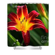 Tiger Lily0263 Shower Curtain