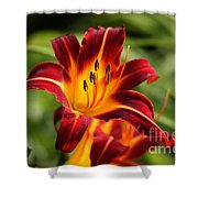 Tiger Lily0272 Shower Curtain