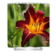 Tiger Lily0275 Shower Curtain