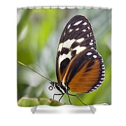 Tiger Longwing Butterfly Heliconius Shower Curtain