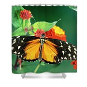 Tiger Longwing Heliconius Hecale Shower Curtain