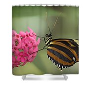Tiger Longwing On Flower Shower Curtain