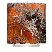 Tiger Shrimp On Orange Sponge, Bali Shower Curtain