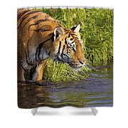 Tiger Standing In Water Shower Curtain