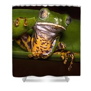 Tiger-stripe Monkey Frog Shower Curtain