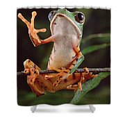 Tiger Striped Leaf Frog Waving Shower Curtain