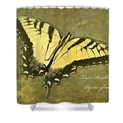 Tiger Swallowtail Butterfly - Papilio Glaucas Shower Curtain