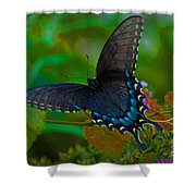 Tiger Swallowtail Butterfly Female Shower Curtain