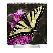 Tiger Swallowtail On Pink Hyacinth Shower Curtain