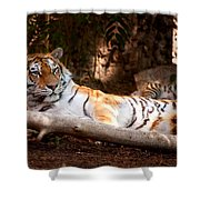 Tigress And Cubs Shower Curtain