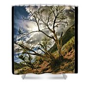 Tilted Trees Shower Curtain