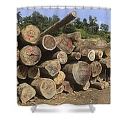 Timber At A Logging Area, Danum Valley Shower Curtain