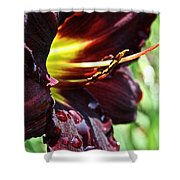 Timber Creek Ace Shower Curtain