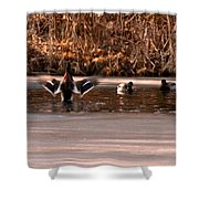Time For Me To Fly Shower Curtain by LeeAnn McLaneGoetz McLaneGoetzStudioLLCcom