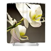 Time To Bloom Shower Curtain