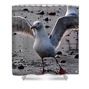 Timeless Wings Shower Curtain
