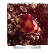 Tiny Cowrie Shell On Dendronephtya Soft Shower Curtain