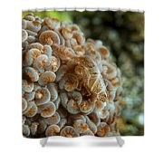 Tiny Cryptic Brown And Grey Shrimp Shower Curtain