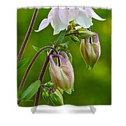 Tiny Floral Swans And Cygnets Shower Curtain