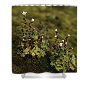 Tiny Flowering Plant Grows In Moss Shower Curtain