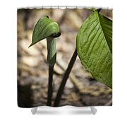 Tiny Jack In The Pulpit Shower Curtain