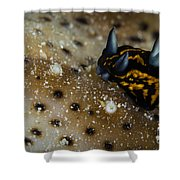 Tiny Nudibranch On Sea Cucumber Shower Curtain