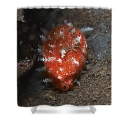 Tiny Red Yellow And White Cowrie Shower Curtain