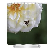 Tiny Spider  Shower Curtain