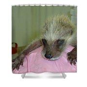 Tiny Tim Shower Curtain