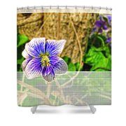 Tiny Violet   Blank Greeting Card Shower Curtain
