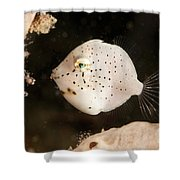 Tiny White Filefish With Small Black Shower Curtain