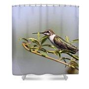 Tipping Around Shower Curtain