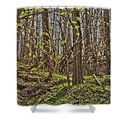 Tire Trees Shower Curtain