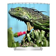 To The Point Shower Curtain by Karen Wiles
