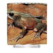 Toad Atelopus Senex On A Leaf Shower Curtain